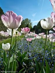 Mademoiselle Freud aime les fleurs