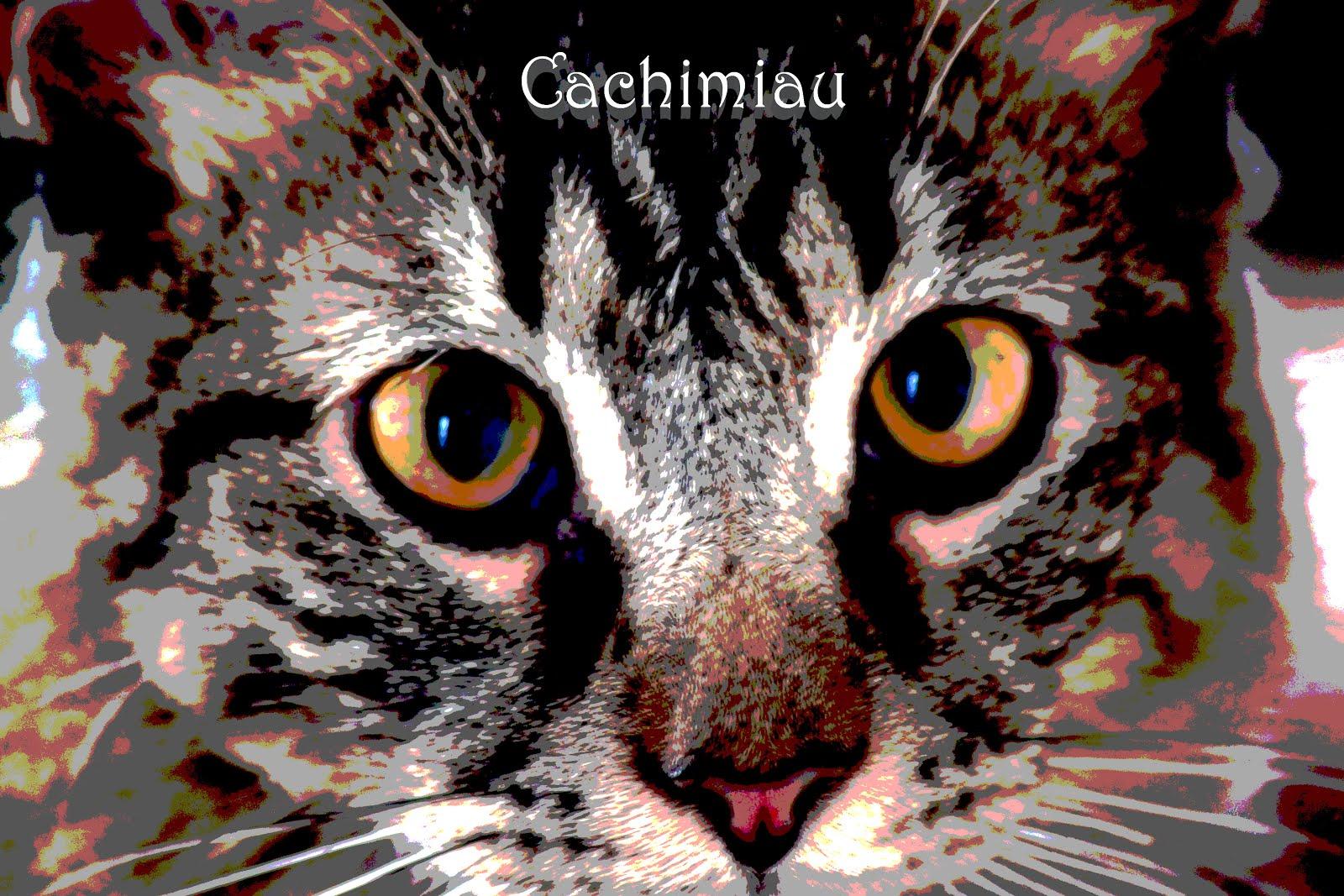 Apoyo CaCHiMiau