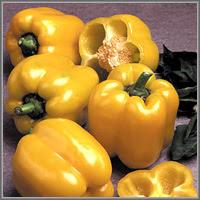 Сладкий перец сорт «Керала»