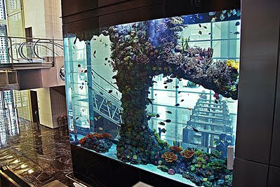 Bellaphon how was your sunday for Tower fish tank