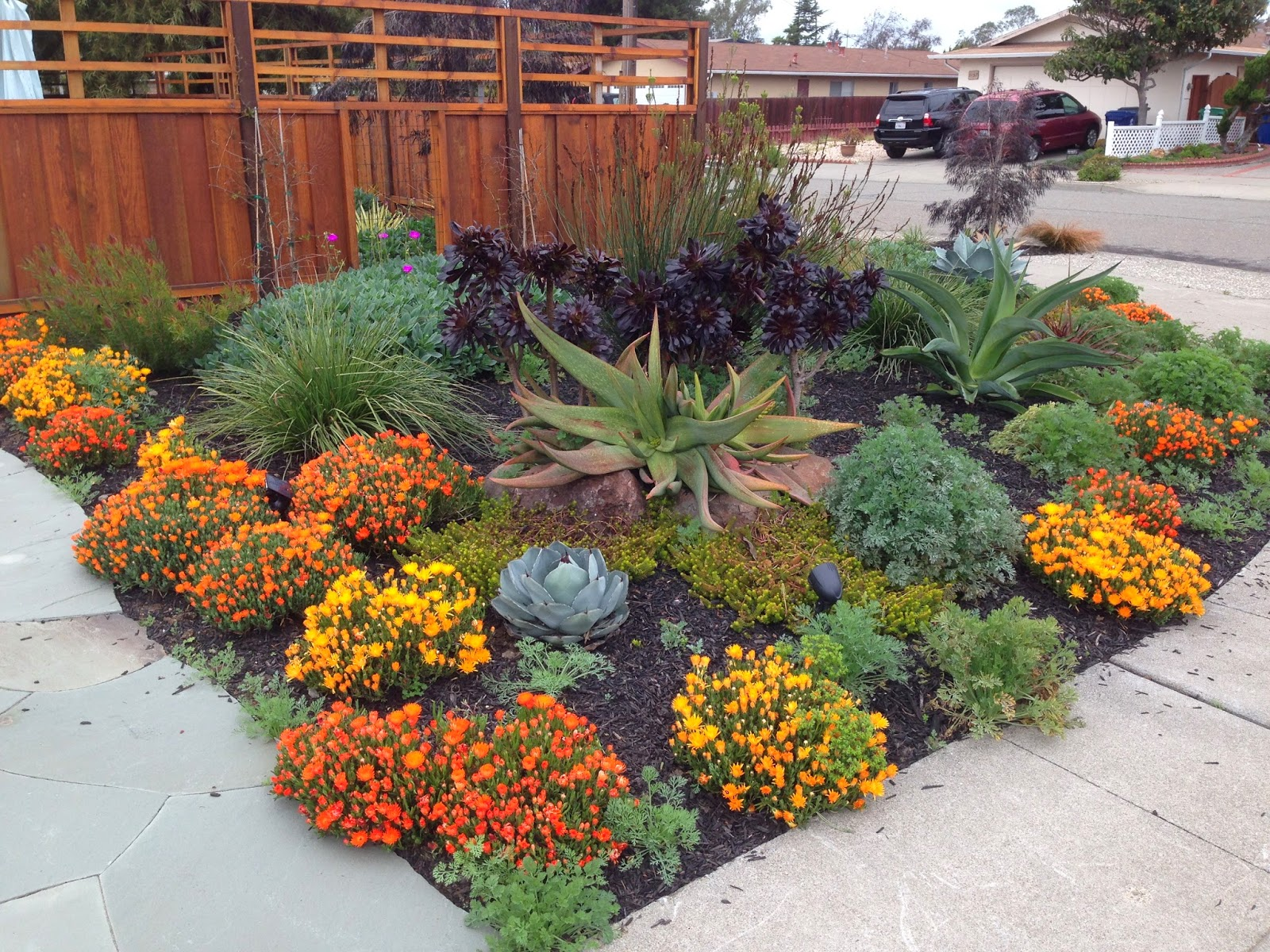 Farallon gardens alameda drought tolerant garden for Garden landscape photos