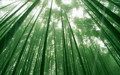Trong rừng trúc - Akutagawa Ryunosuke