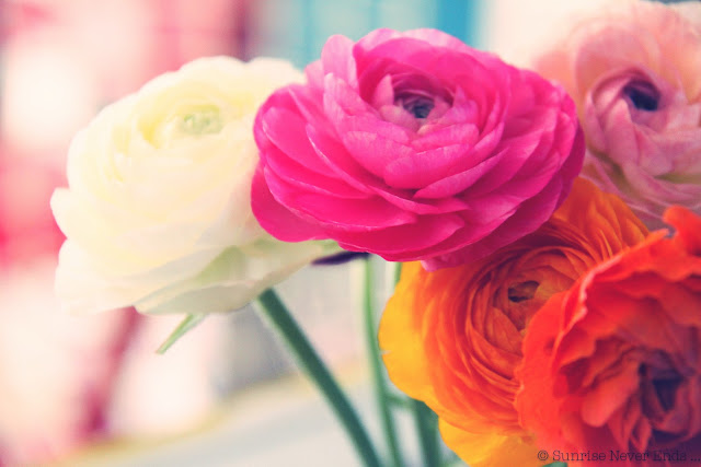 fleurs,couleurs