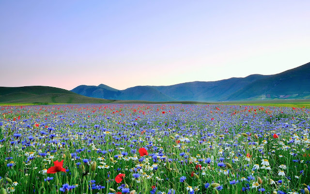 Colorful Flowers with Mountaineous landscape