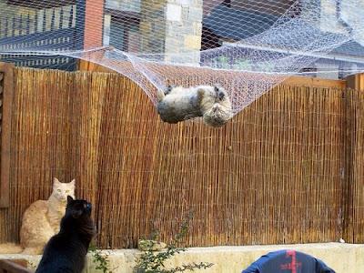 Soy un gato protege a tu gato de una ca da for Red transparente para gatos