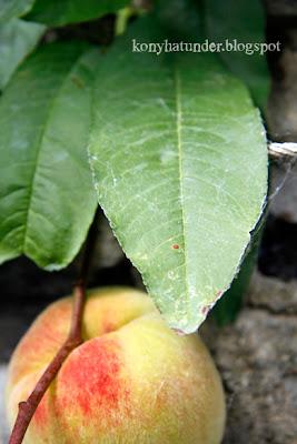 august-in-the-garden-yellow-flesh-peach