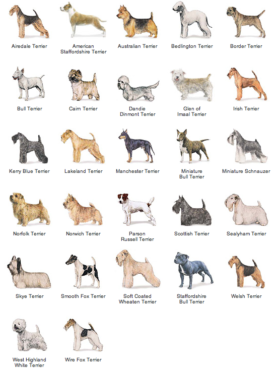 What Are The Groups Of Dog Breeds