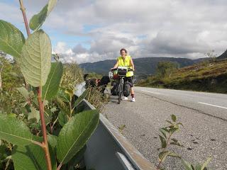 cykla med hund, cykelkärra hund, Lina Hallebratt