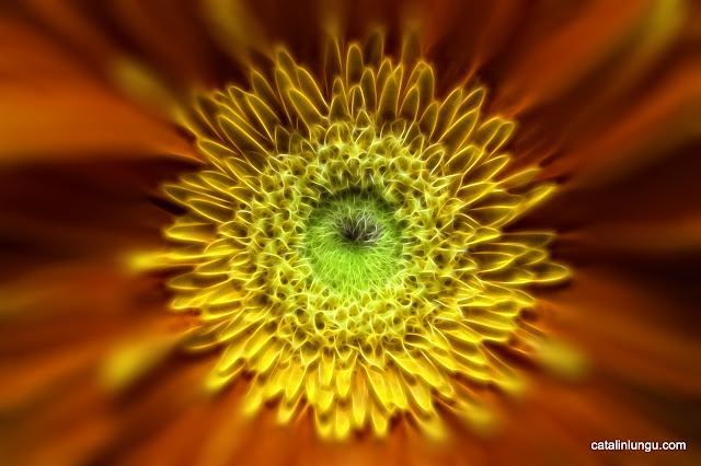 Fractalius Flower