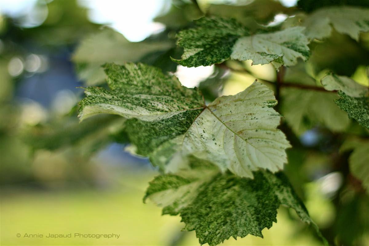trees, leaves, nature, summer