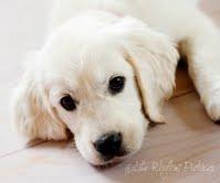 A Moses/Darla Pup