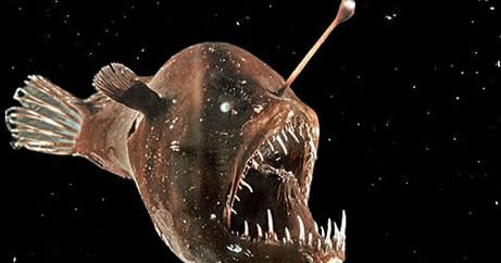 Fun with flora fauna fungi food fish at the for Where do angler fish live
