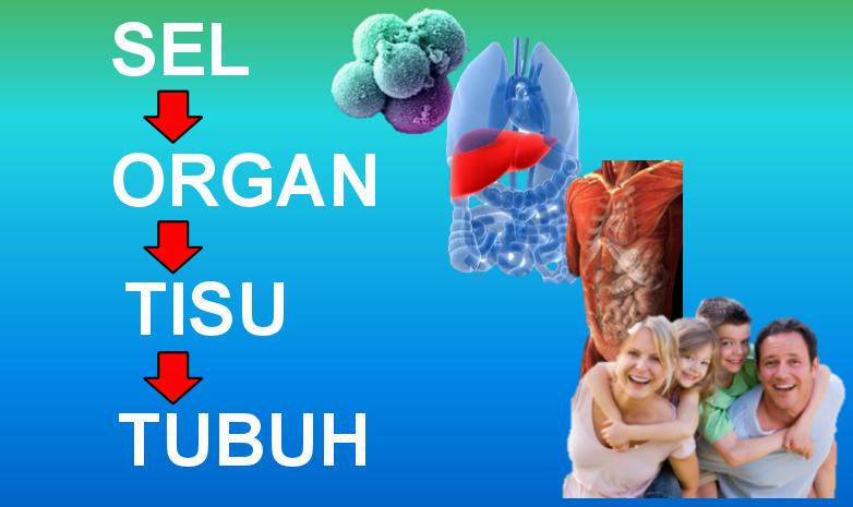 stem cell induk, stem cell induk dewasa, stem cell dewasa, sel yang membentuk tisu, organ, tubuh, keistimewaan stemcell induk, kehebatan stemcell dewasa,cellmaxx,testimoni cellmaxx,harga cellmaxx