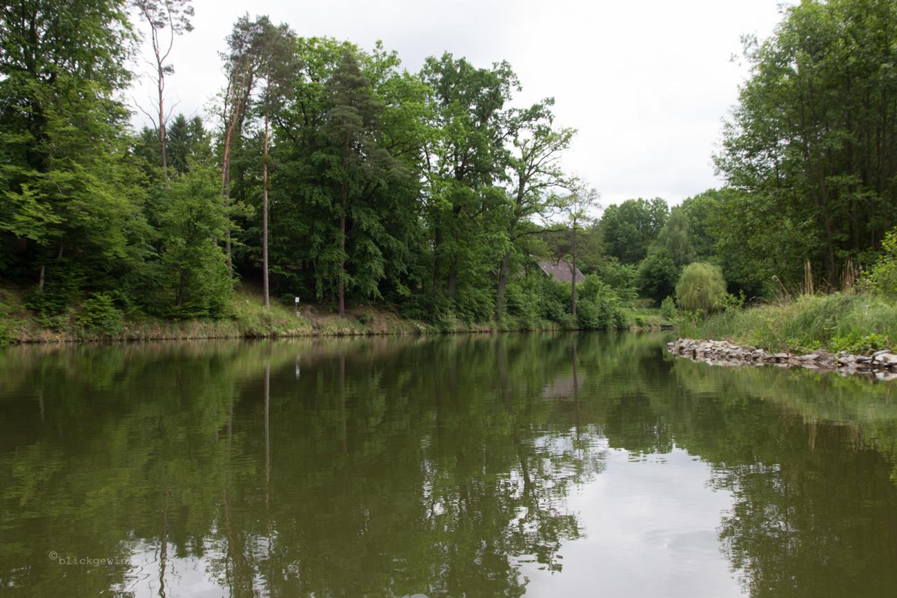 Fluss und ursprünglicher Wald