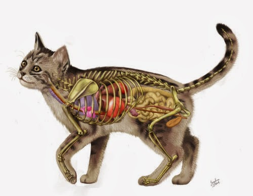 forget me not [smile]: domestic animal anatomy
