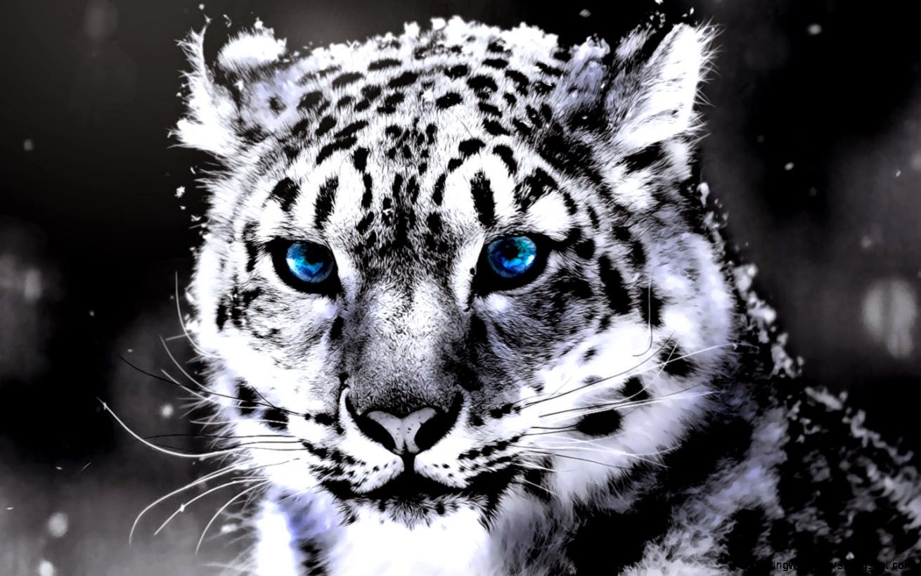 White Tiger With Blue Eyes Wallpaper | Amazing Wallpapers