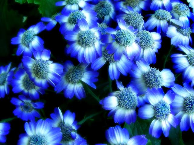 Best Flower's