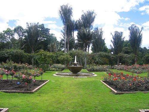 Tortuga jicotea terrapen terrapin en jard n bot nico for Jardin botanico horario