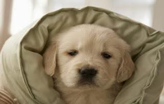 http://todomanualidades-admin.blogspot.com.es/2011/05/almohadon-para-perros.html