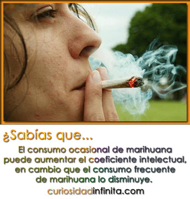 fumar marihuana aumenta la inteligencia
