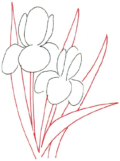 Line Drawing Iris Flower : Cartoon pictures how to draw an iris in steps