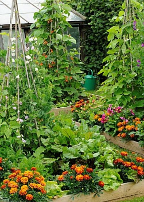Tra orto e giardino i lavori nell 39 orto di gennaio for Piantine orto prezzi