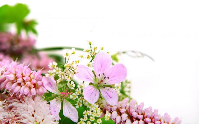 Imagenes de Carpelos de Flores Rosadas