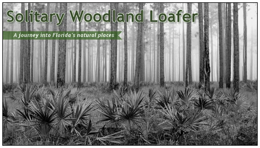 Solitary Woodland Loafer