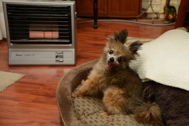 Always supervise pets near artificial heat sources