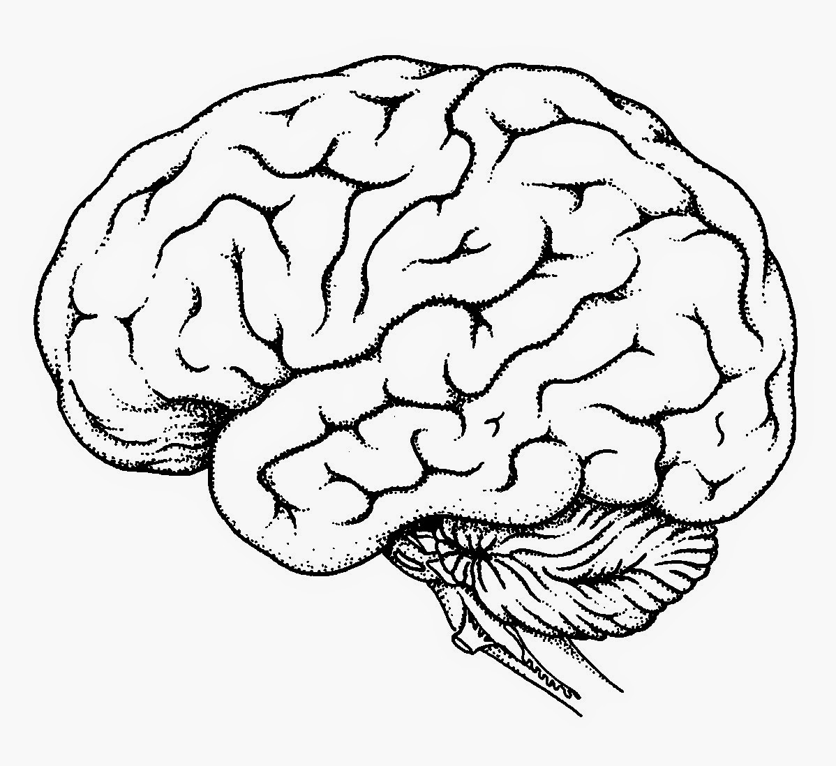 Brain diagram no labels