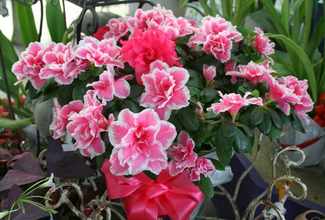 The Flower Bin Colorful Indoor Plants For Your Valentine