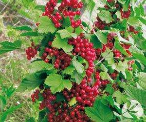 Estilo y hogar rboles frutales peque os para terrazas o for Arbustos enanos para jardin
