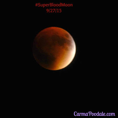 full eclipse of the #SuperBloodMoon