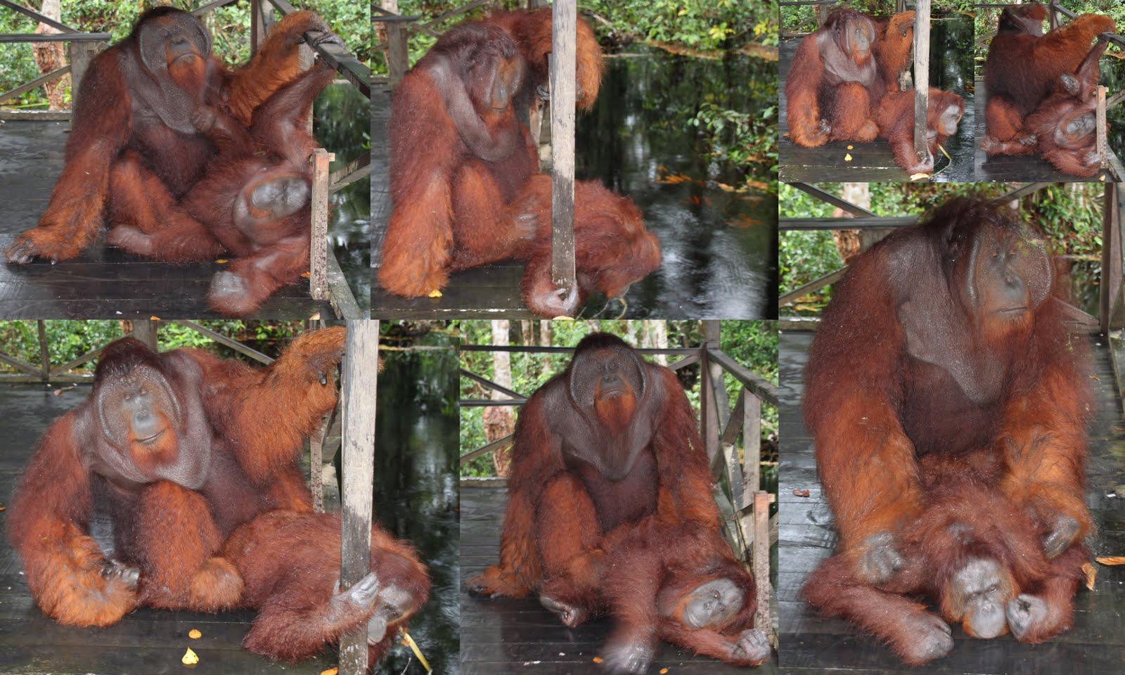 Site chica desnuda cam elephant live webcam sex picture 62