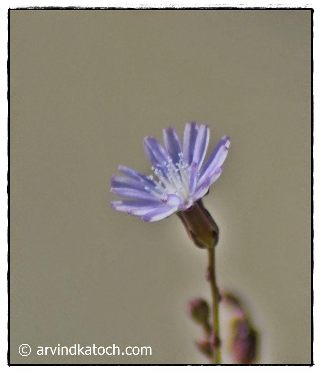 Flower, Tiny flower,