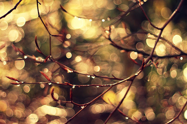 golden sunlight and sparkling raindrops