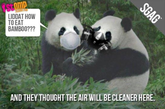 stomp singapore panda haze