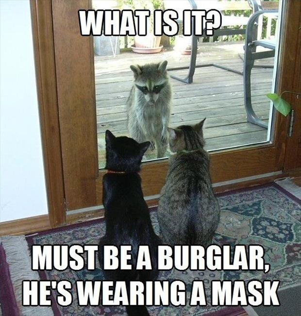 talking cats translation