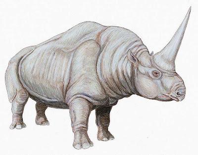 Perissodactyla extinta Elasmotherium