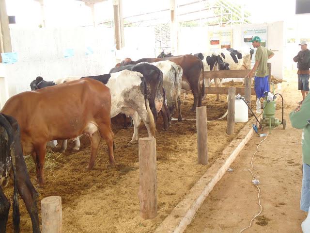 Expoagro São Sebastião valoriza produção agropecuária local