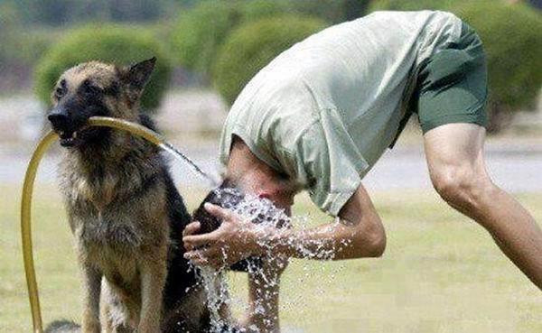صور غريبة - صفحة 6 Funny+a+dog+faithful-assistant