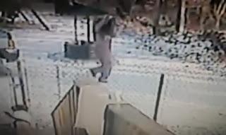 mujer atacada por un gato en la nieve