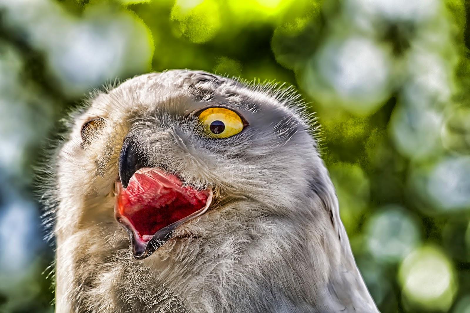 Fotografía de aproximación de aves