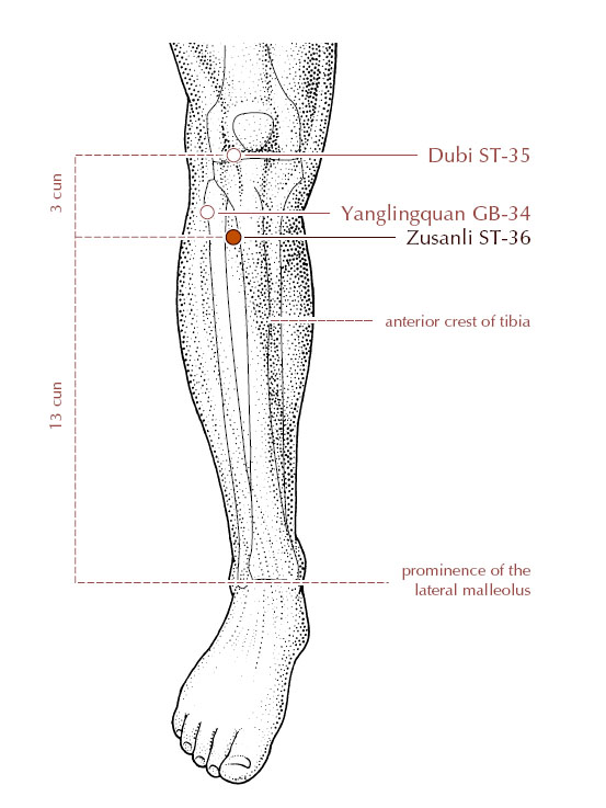 Acupressure Point St 36 To Boost
