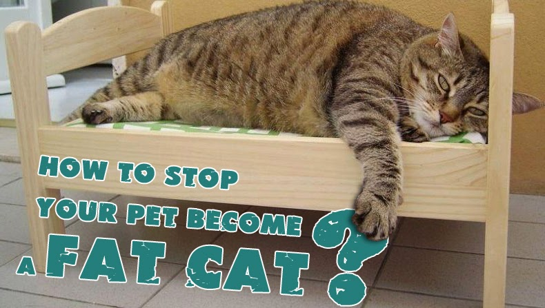 Fat Cat, Fat Cats, pets, pet, cat, Cats, How to Stop Your Pet Become a Fat Cat, Stop Your Pet Become a Fat Cat, cats game fat, cats pics fat,