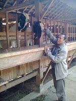 Kefir susu murni kambing etawa