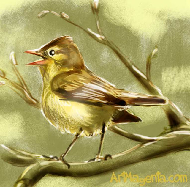 Icterine Warblersketch painting. Bird art drawing by illustrator Artmagenta