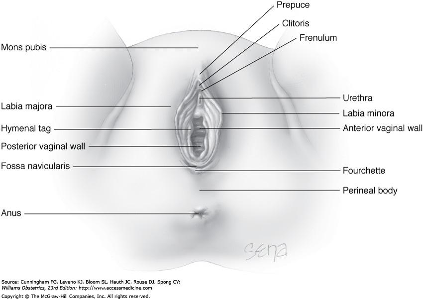 Nurse Advocate: Physical Exam: Female Reproductive System