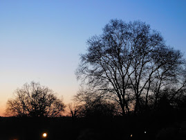 PICS FROM PAST WEEKS: Trees on Ludlow Ave. at dusk