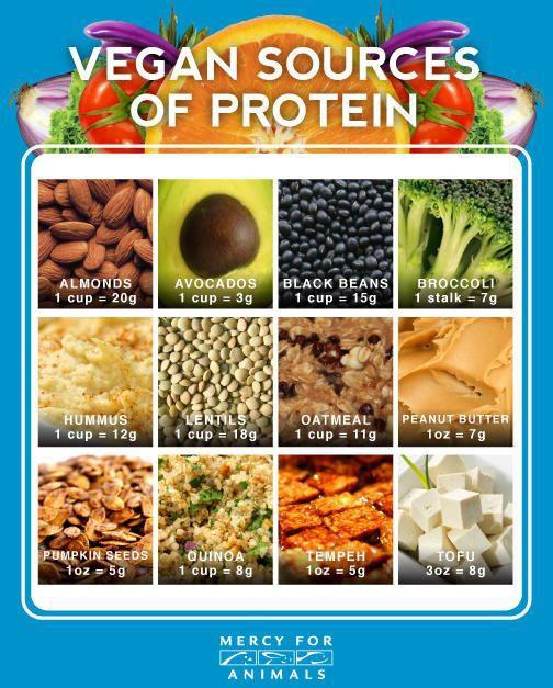 Lily Among Thorns: Plant-Based Sources of Protein